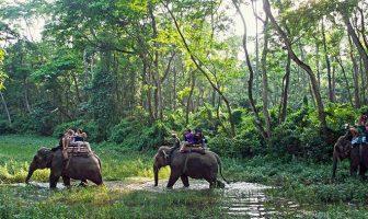 chitwan-national-park-elephant-ride